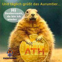 DH-Aurumtier