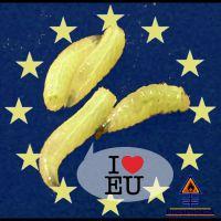 DH-EU_Maden_I_luv_EU