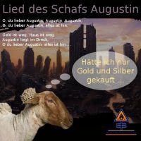 DH-Schaf_Augustin
