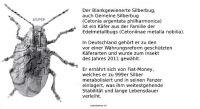 DH-Silber-Bug