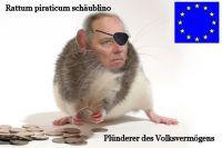 PW-rattus-schaeublino