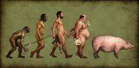 Menschliche_Evolution