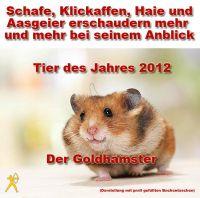 PL-Goldhamster
