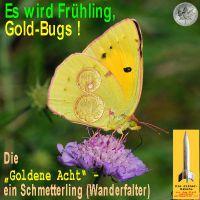 SilberRakete_Falter-Goldene-Acht2