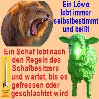 SilberRakete_Loewe-Schaf