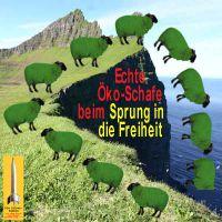 SilberRakete_Oeko-Schaf-Sprung-Freiheit