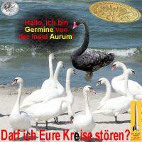 SilberRakete_Schwan-Germine-Kreise