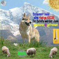 SilberRakete_Wolf-Krise-Schafe-fressen