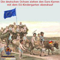 DH-Deutsche_Ochsen