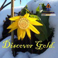 DH-Discover_Gold_Topinambur2