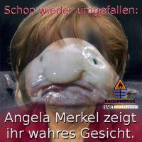 DH-Merkel_Blobfish