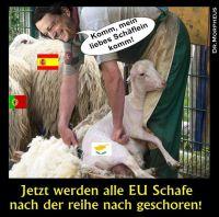 OD-EU-Schafe