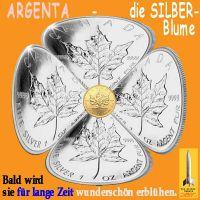 SilberRakete_ARGENTA-Silberblume-Maple