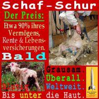 SilberRakete_Schaf-Schur-bald-grausam-blutig-Haut-weltweit2