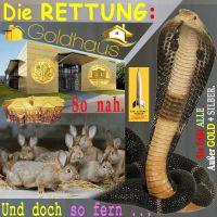 SilberRakete_Hasen-vor-Schlange-Rettung-GOLD-Haus