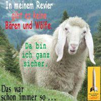 SilberRakete_Schaf-Revier-keine-Baeren-Woelfe-sicher-schon-immer