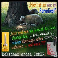 SilberRakete_Schafe-im-Paradies-Baum-Wasser-Gras-vorkauen-schlucken-Dekadenz-endet-immer2