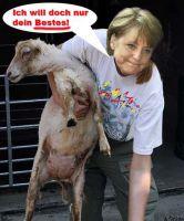 JM-Schafschur-Merkel